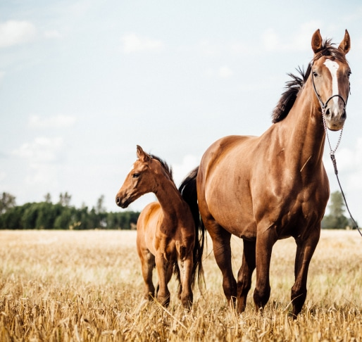 About Page - Equine mother and foal